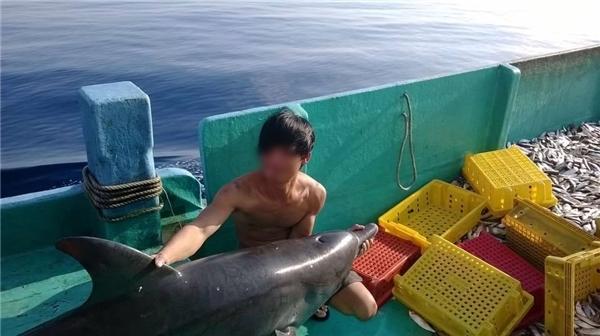 Đã tìm thấy thông tin nhóm thanh niên giết cá heo ở Phú Quốc