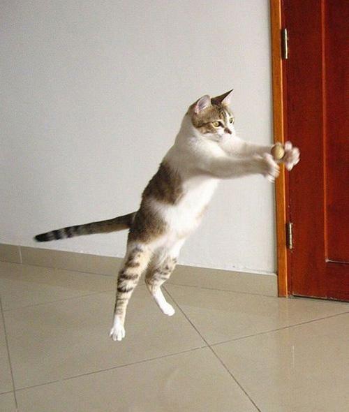 Không cần cánh siêu mỏng mèo ta vẫn bay được nhé.