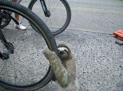 Lười muốn được đi chơi, lười muốn đạp xe đạp chậm.