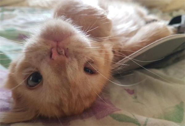 Cảm động chuyện chú mèo xấu xí không đáng được nhận nuôi