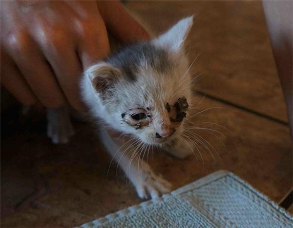 Bé mèo tội nghiệp sau khi được giải cứu ra khỏi ổ điện.