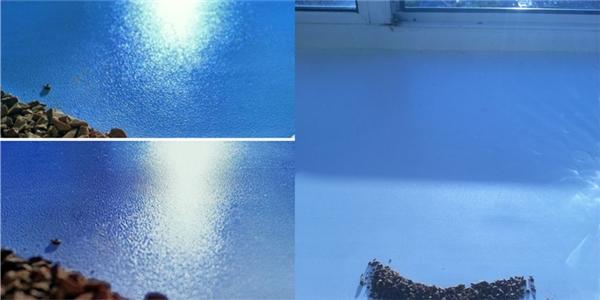 Chỉ với một chút mánh khóe nhỏ là bạn có thể tạo được cả đại xương xanh thẳm rồi.