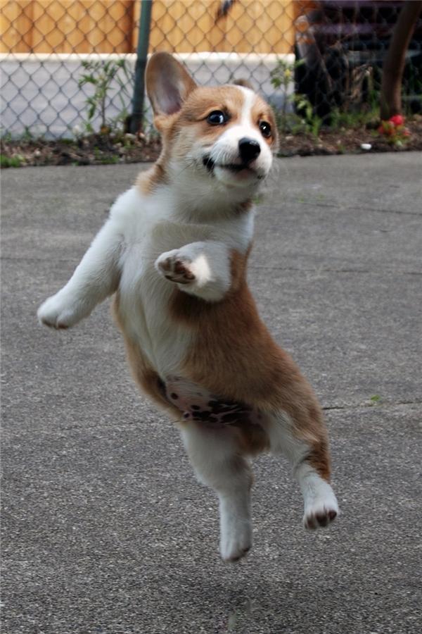 Mẹ mẹ! Xem con nhảy cao chưa này!