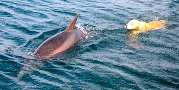 Cô nàng cá heo Guggie đã chọn hòn đảo Tory làm hà của mình vì nơi đây có người bạn thân thiết là chú chóBen.
