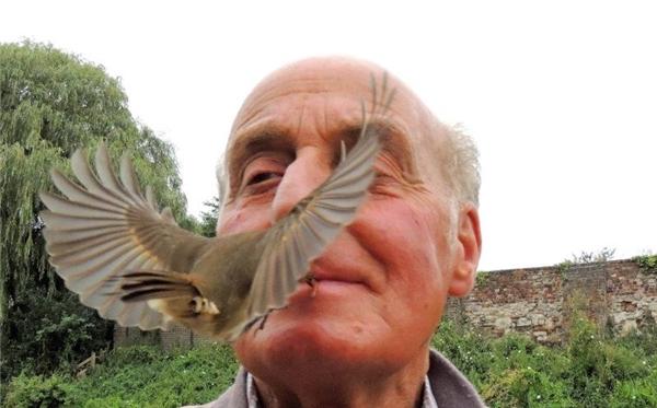 Ông Terry đặt con sâu trong miệng và sau đó một chú chim lao tới ăn.