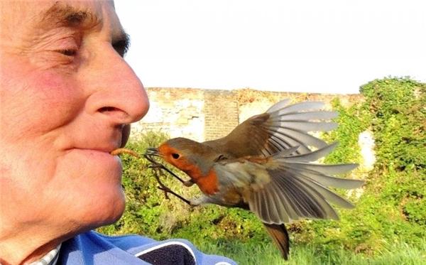Đây là một cách cho chim ăn độc đáo mà khôn phải ai cũng nghĩ ra được.