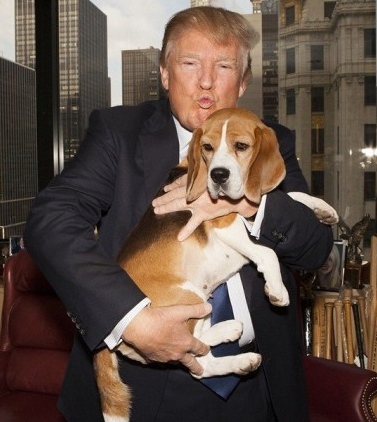 Spinee đã từng được xuất hiện với ông Trump trong chương trình Westminster Kennel Club - chương trình dành riêng cho những chú chó tham dự. Nhiều ngườiđồn đoán rằng nhiềukhả năng chú chó này sẽ trở thành Đệ nhất thú cưng tiếp theo được nuôi trong Nhà Trắng.