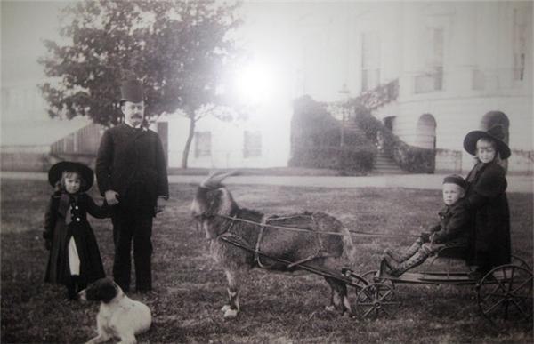 """Trước đây, đa số các tổng thống Mỹ đều sở hữu một vật nuôi được người ta gọi với danh xưng """"Đệ nhất thú cưng Nhà Trắng"""". Trong ảnh, tổng thốngBenjamin Harrison chụp ảnhcon dê Whiskers - thú nuôi nổi tiếng của ông."""