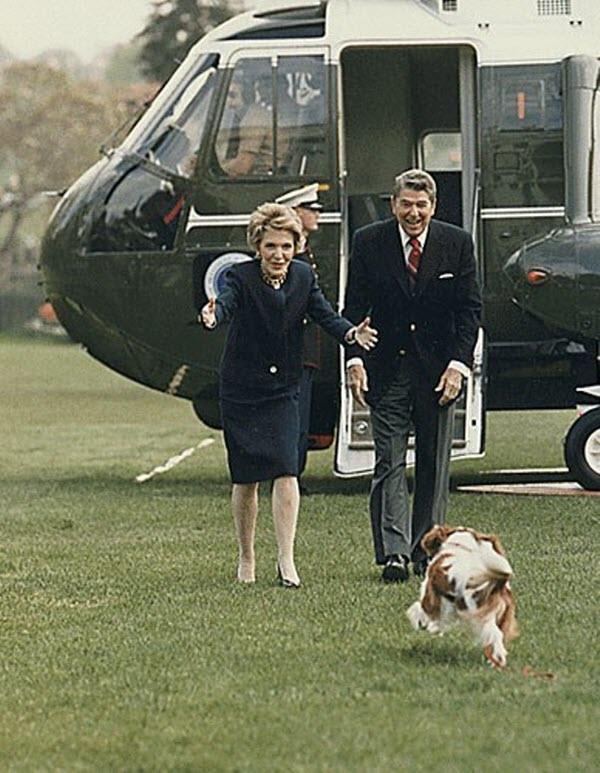 Chú cún cưng tên Rex mừng rỡ ra đón tổng thống Ronald Reagan và đệ nhất phu nhân Nancy.