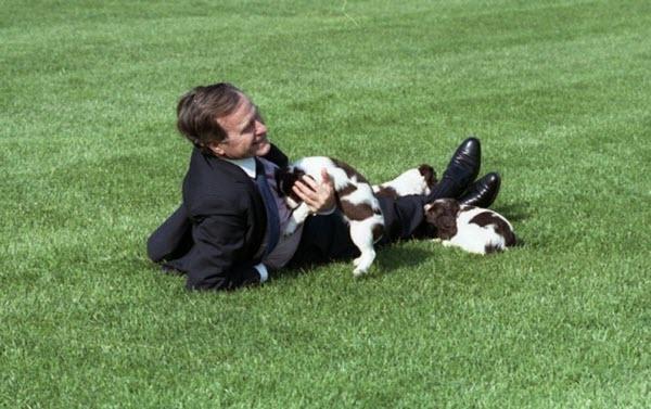 Tổng thống Mỹ George H.W. Bush đùa giỡn với con chó cưng Millie.