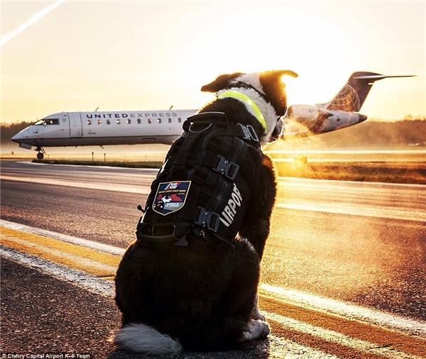 Có lẽ niềm hạnh phúc của chú chó này là được nhìn những chuyến bay cất cánh an toàn. (Ảnh: Internet)