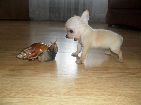 Ê, ốc sên! Không được bắt nạt con chó nghe chưa!