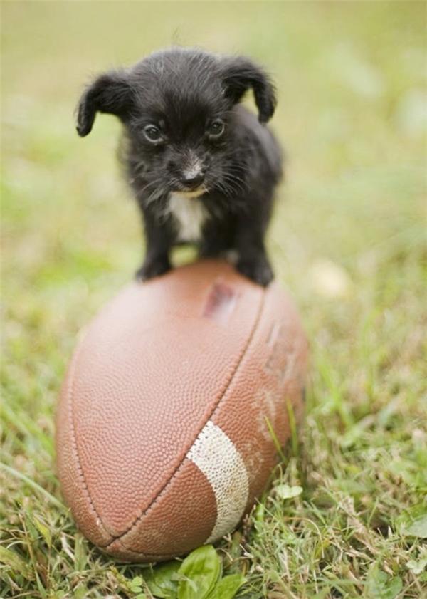 Bởi vì nhỏ quá nên ngay cả khi đã đứng lên quả bóng, quả bóng cũng không nhúc nhích.