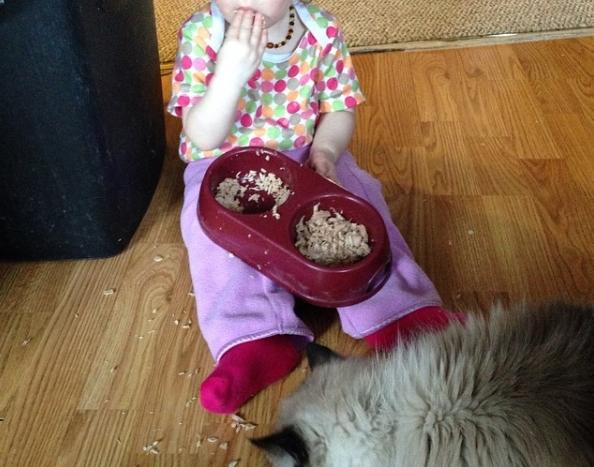 Giành ăn thức ăn của chó mèo.