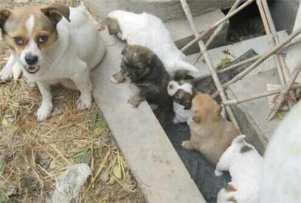 Thì ra chó mẹ mang thức ăn về cho con mình. (Ảnh: Internet)
