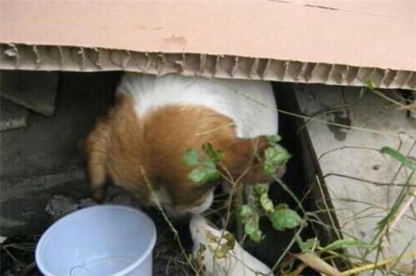 Chàng trai đã làm cho mẹ con nhà chó một chỗ ở nhỏ. (Ảnh: Internet)