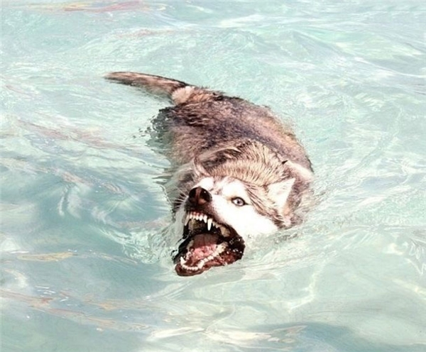 Ta là con cá sấu đây!