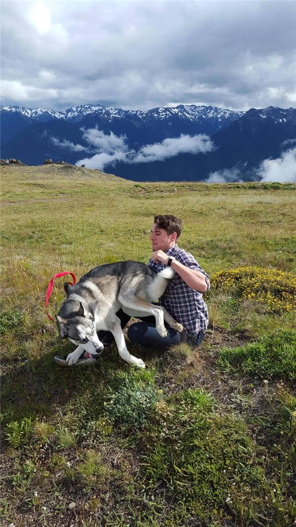 Chụp cho husky một bức ảnh tử tế luôn rất là vất vả.
