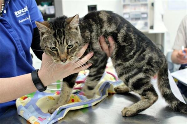 Chỉ có duy nhất 1 chú mèo con may mắn sống sót và đã được trung tâm bảo vệ động vật đem về chăm sóc. Nó được đặt tên là Trooper.