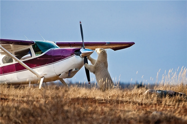 Phù cuối cùng cũng lắp ráp xong chiếc máy bay triệu đô rồi.