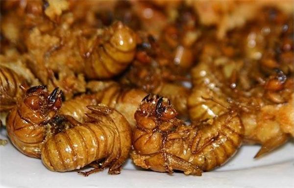 Nhiều đặc sản ve sầu của miền Tây Việt Nam được thực khách khắp nơi đặc biệt ưa chuộng như ve sầu chiên giòn, ve sầu xào lăn,…