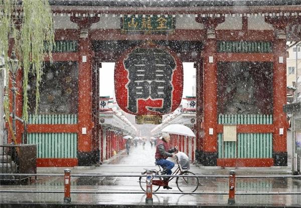 Tuyết đổ trắng xóa vào mùa thu ở Nhật Bản sau hơn nửa thế kỉ