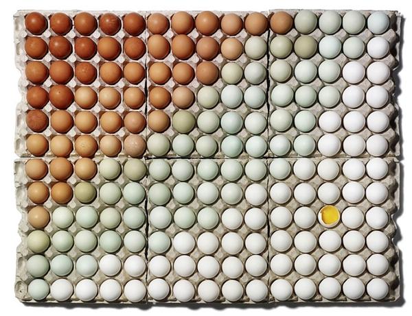 Người ta sắp xếp đẹp đến nỗi phải đập một quả ra để chứng minh nó là trứng thật.