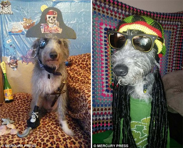 Jim sẽ không dừng việc biến hóa chú chó của mình khi ông vẫn còn rấtnhiều ý tưởng.