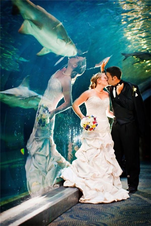 Trông cô dâu cứ như đang hôn chú cá trong bể bơi.