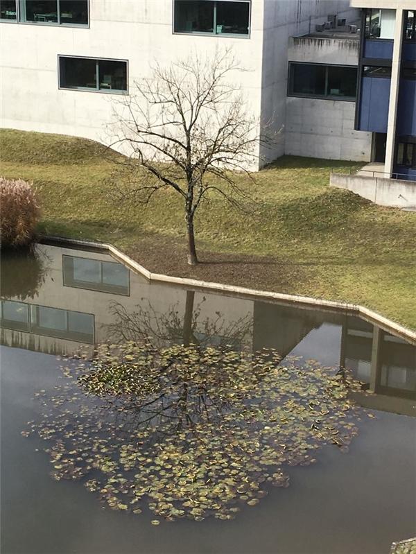 Sao những cái lá có thể rơi đúng một vị trí hay thế cơ chứ.