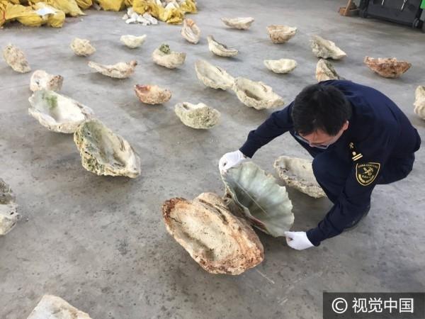 Ngoài ra, các quan chức cũng phát hiện nhiều vỏ sò cỡ lớn.