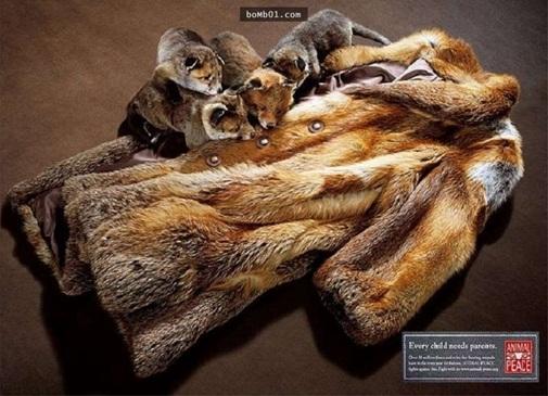 Thế nhưng để tạo được một chiếc áo tuyệt đẹp này hàng chục con thú vô tội đã bị sát hại.