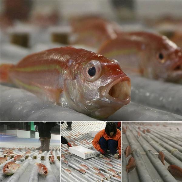 Tất cả đều là cá thật chứ không phải mô hình.