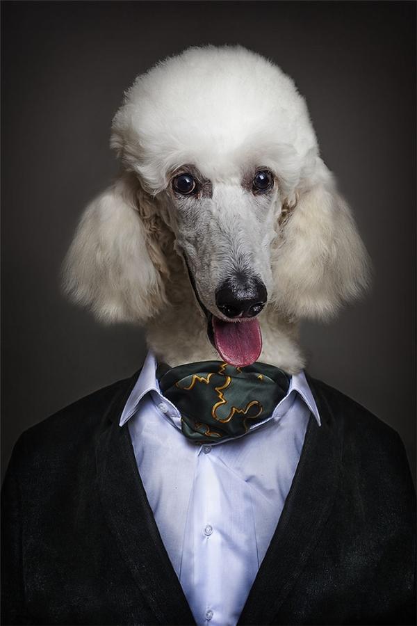 Một phong cách tuyệt vời dành chochú chó đáng yêu.