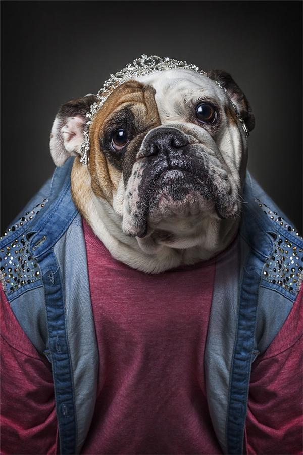 Ấn tượng với những chú chó ăn diện sành điệu không thua người mẫu