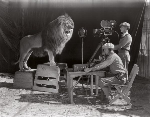 Đây là cách người ta thực hiện đoạn giới thiệu cảnh con sư tử đang gầmcủa hãng MGM ở đầu mỗi bộ phim. Ảnh được chụp năm 1928, năm khởi đầu của kỷ nguyên phim Hollywood.