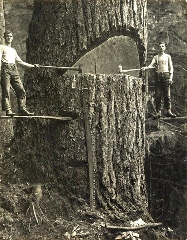 Những người thợ xẻ gỗ ở Portland, Oregon, Mỹ, năm 1915.