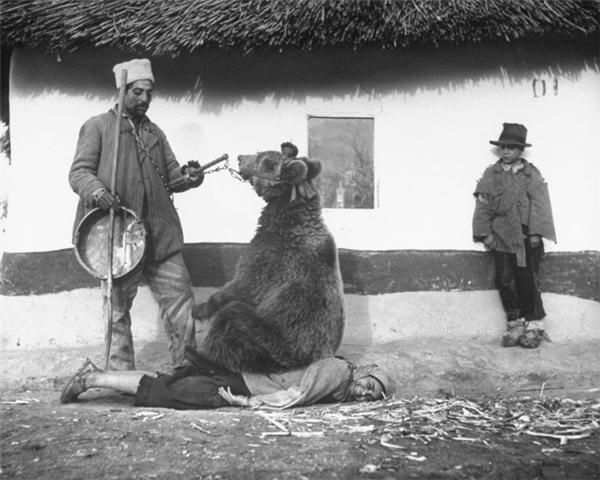 Chữa bệnh đau lưng bằng một con gấu. Romania, 1946.