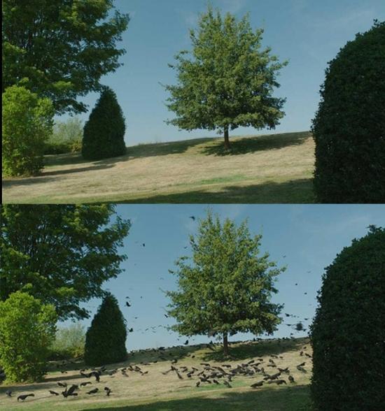 Muốn chim thì có chim, muốn cây là có cây.