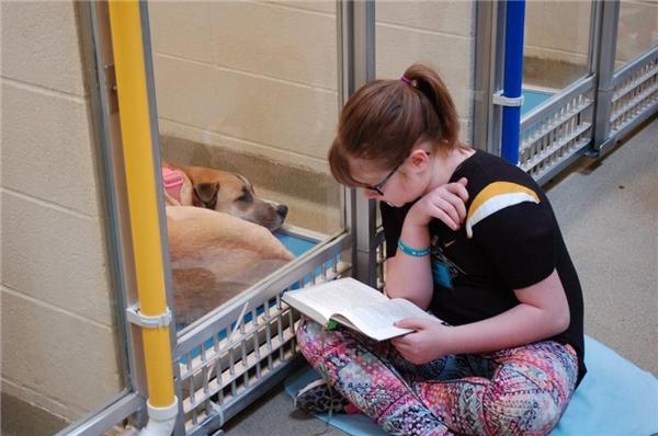 Khi những tình nguyện viên nhí đọc truyện, những chú cún sẽ dần quen và tiến đến gần cửa chuồng hơn, cho thấy rằng chúng thật sự cảm thấy thoải mái khi ở cạnh những đứa trẻ. (Ảnh: Internet)