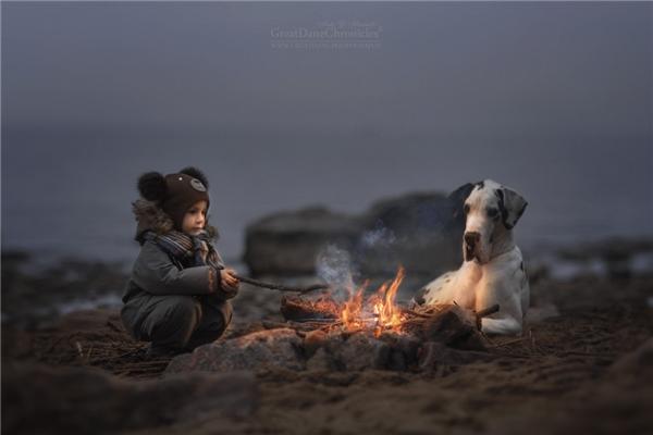 Thích thú với tình bạn của những đứa bé nhỏ bên những chú chó to