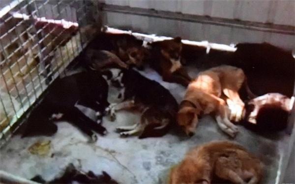 Những chú chó phải chịu cái kết đáng thương.