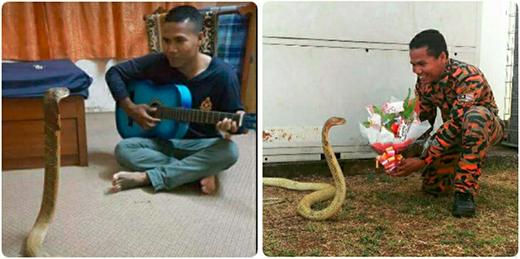"""Abu Zarin, 31 tuổi là một nhân viên cứu hỏa ở đồn Temerloh đã xuất hiện trên tờ Daily Mirror và Daily Mial của Anh với tiêu đề """"Người đàn ông Thái kết hôn với rắn độc giống bạn gái cũ quá cố""""."""