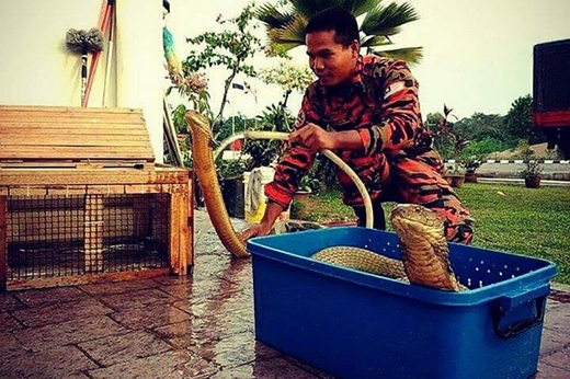"""Sau khi nuôi và chăm sóc qua 4 con rắn, Abu phần nào hiểu hơn về loài động vật này. Anh chia sẻ:""""Tôi huấn luyện rắn từ năm 2007. Sở thích này tôi được cha truyền lại. Ông là một người rất yêu rắn"""", """"Rắn không khó để xử lý. Có nhiều hiểu lầm về loài vật này""""."""