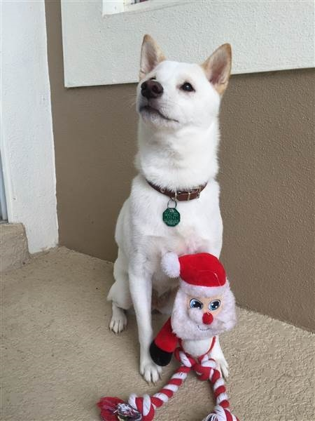 Kya phấn khích bên món đồ chơi ông già Noel khiến nhiều người thích thú.
