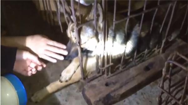 Cô gái đưa tay vỗ về khi chú chó khóc. (Ảnh: chụp màn hình)