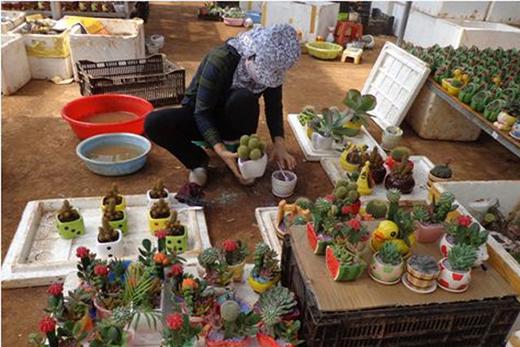 Cô công nhân làm tại vườn cây cảnh đang cẩn thận để xuất xưởng những chậu cây.