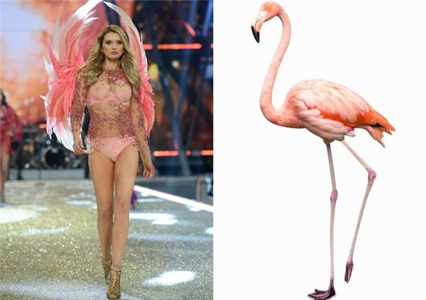 Một con hồng hạc! Chính xác là một con hồng hạc chân dài, cổ cao với bộ cánh màu hồng.