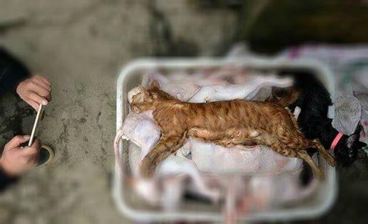 Những con mèo này bị giết hại, giữ đông lạnh và chứa trong căn nhà kho nhỏ của kẻ buôn mèo dã man này.