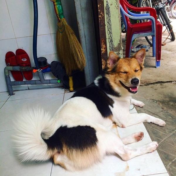Với phần lôngởđầu và mình không hề liên quan gì với nhau, nhiều ngườiđã gọi Heo là chú chó tam thể.